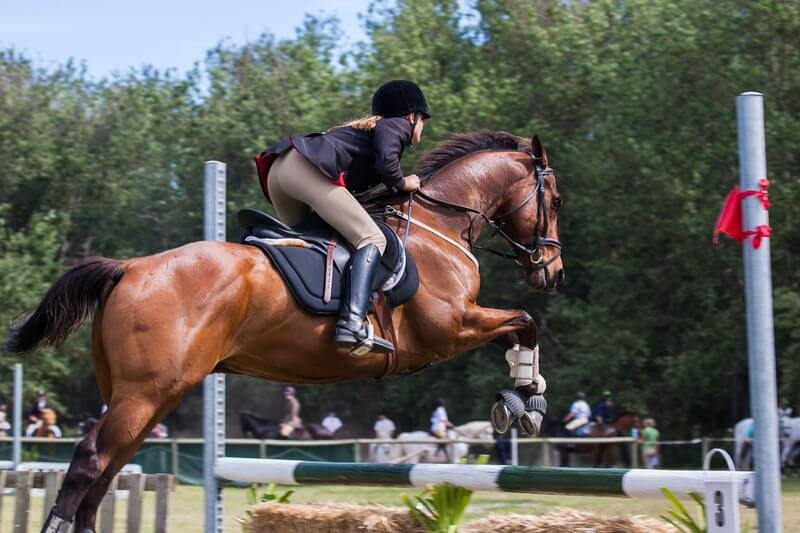 Perfect Horse Sports